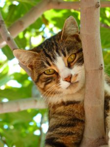 cat in a tree looking down