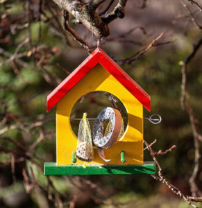 yellow, red and green birdfeeder with fruit