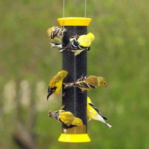 The Best Bird Feeders for Finches