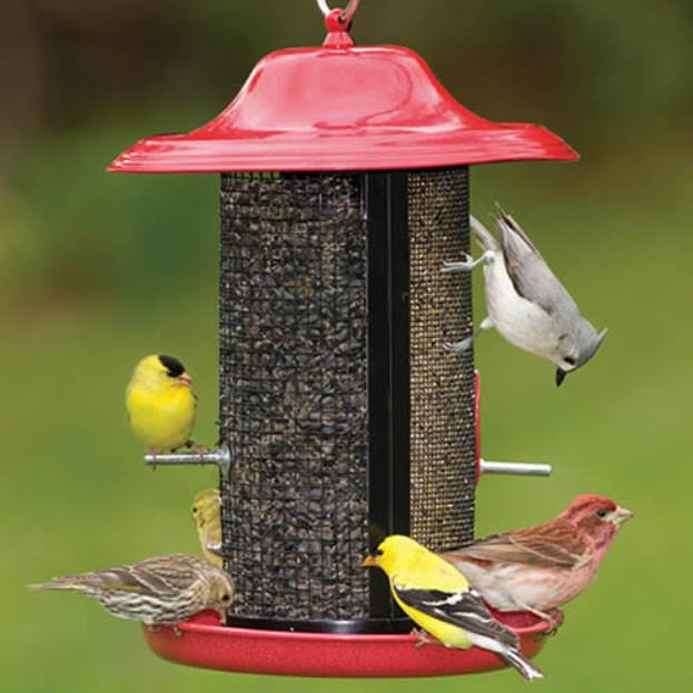 different types of birds at red roofed feeder