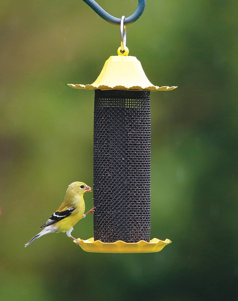finch eating from black and yellow feeder