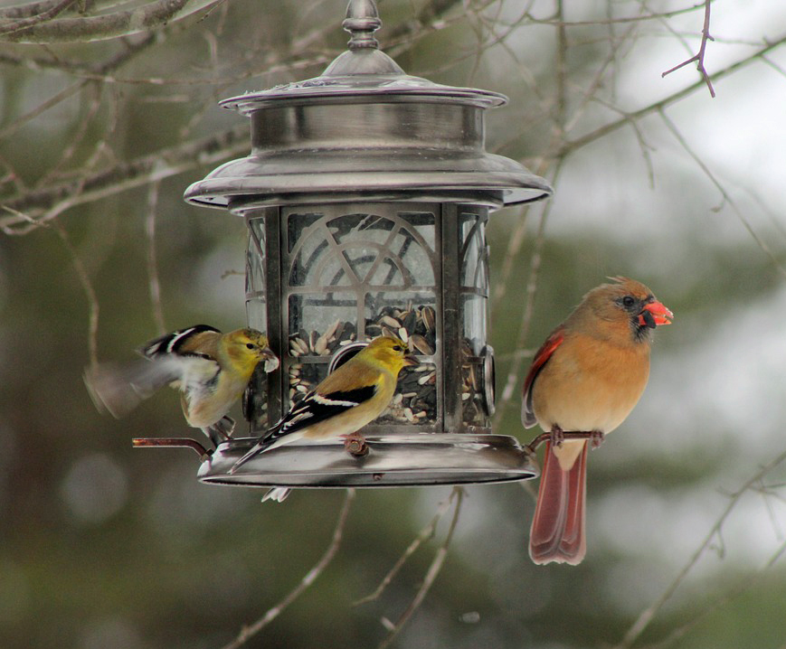 pretty bird feeder with cardinal and yellow birds visiting