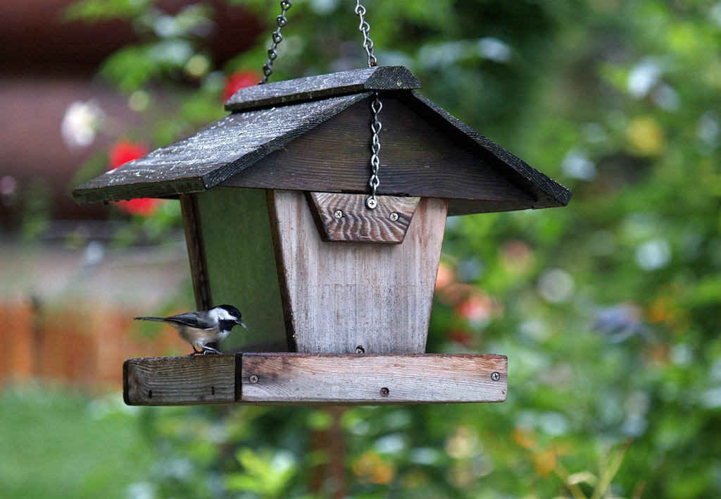 chickadee eating from birdfeeder