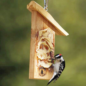 woodpecker at peanut butter feeder