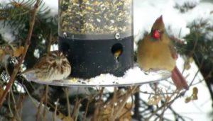 birds sitting on a feeder in winter