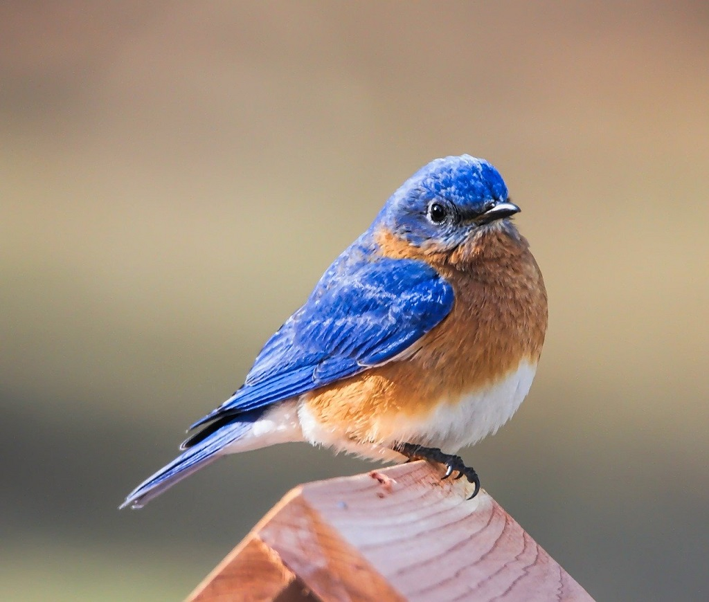 bluebird perched on the top of a birdhouse