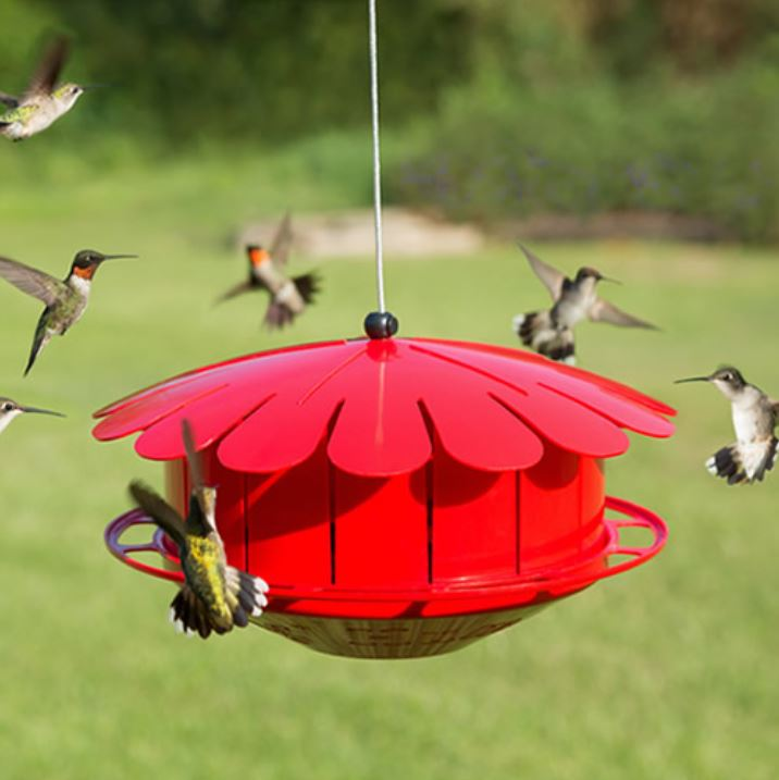 Red Fruit Feeder for Hummingbirds by Duncraft
