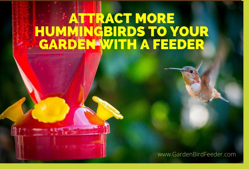 Red hummingbird feeder with yellow tubes - Attract More Hummingbirds to Your Garden with a Feeder
