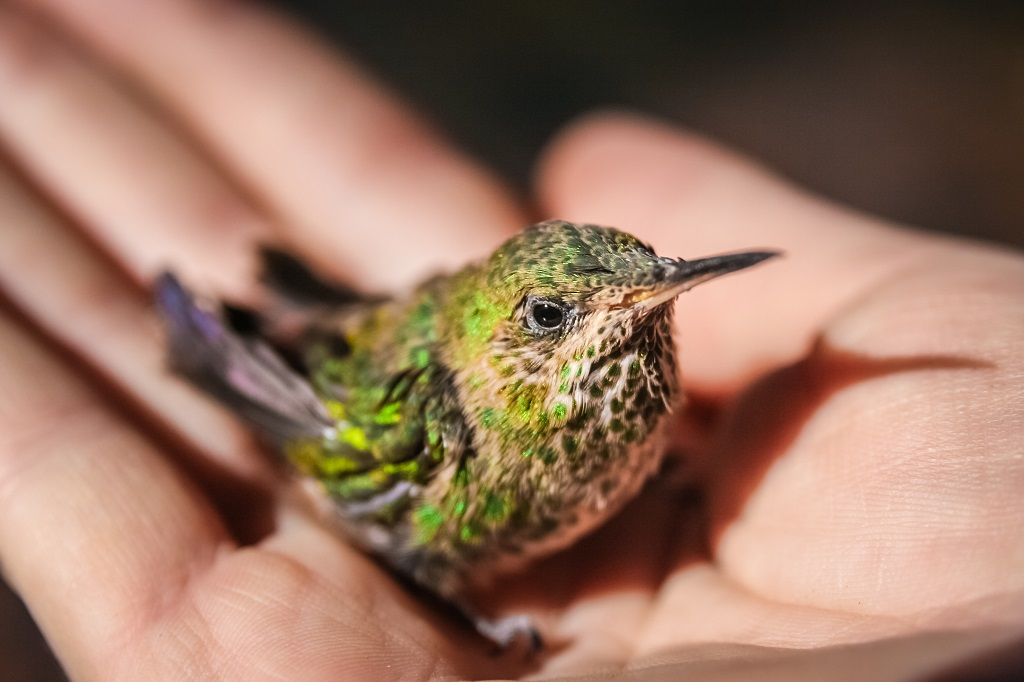 hand holding a little yellow and green hummingbird
