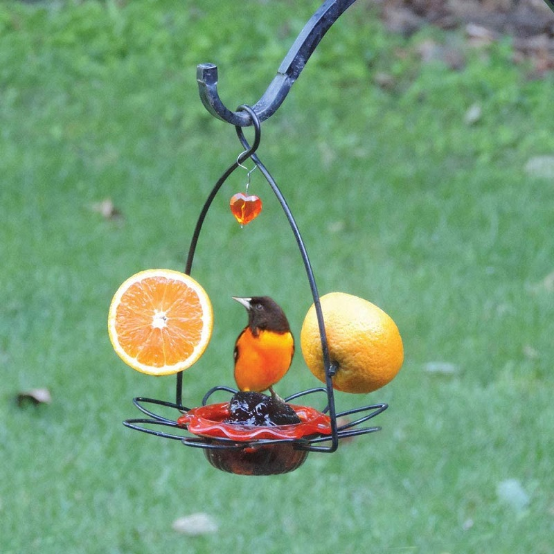 oriole sitting on a jelly feeder with 2 oranges on either side of the birds choice feeder