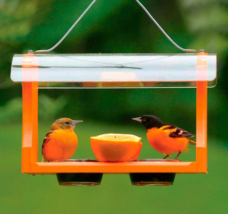 Two orioles sitting on a bright orange feeder with jelly cups and an orange in between