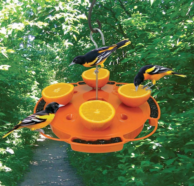 Large orange plastic feeder with 3 orioles feeding from it