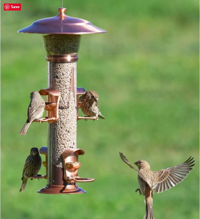 Tube Style Bird Feeder with 4 birds and copper accents