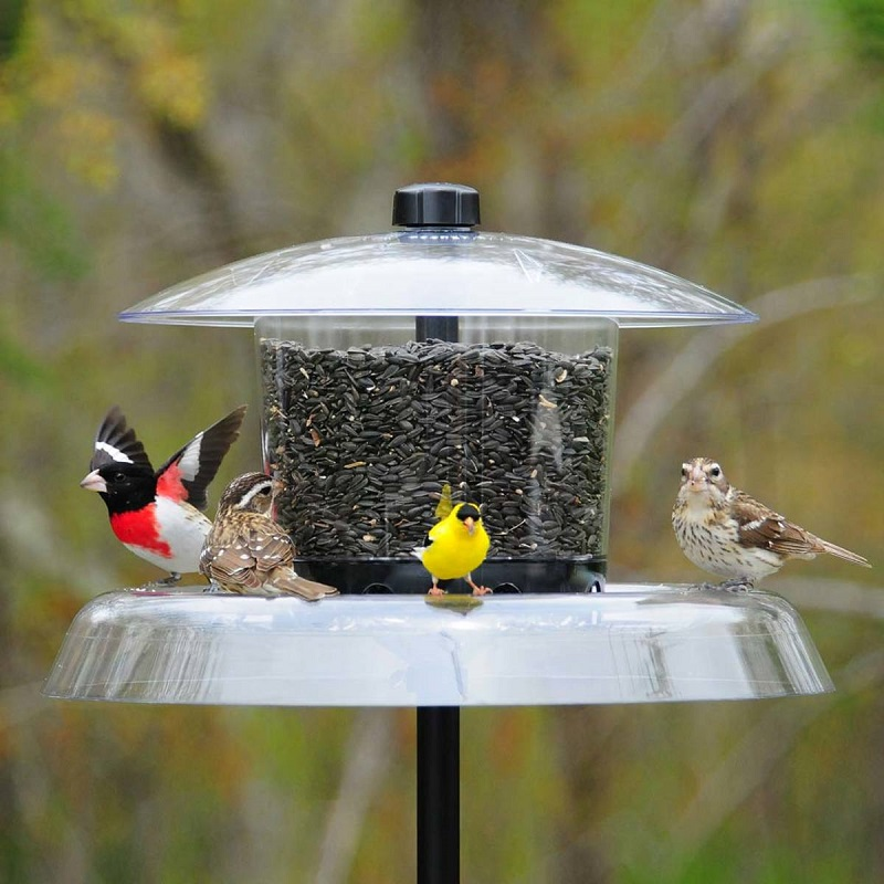 large plastic feeder with dome and squirrel resistant tray