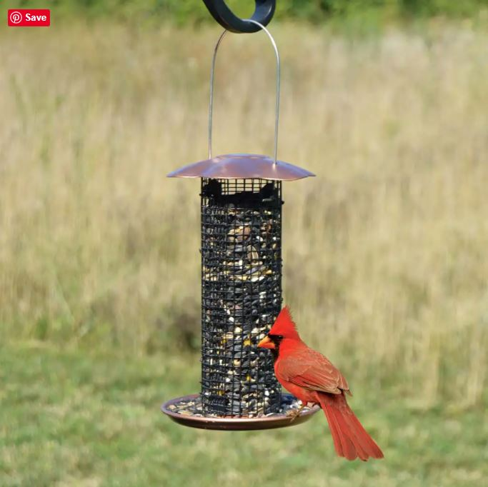 Small Sunflower Seed Feeder with Cardinal